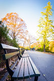 Empty benches in autumn at Central Park Stock Photos
