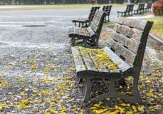 Empty benches in autumn park Stock Photos