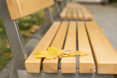 Empty benches with autumn yellow leaves. Royalty Free Stock Images