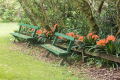 Empty benches with clivia flowers Stock Photos
