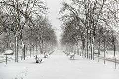 Empty benches coverd by snow on the boulevard. During heavy snowfall in winter town Royalty Free Stock Images