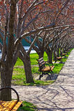 Empty benches in the morning. Stock Images