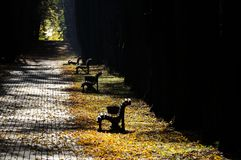Empty Benches in Park in Autumn Royalty Free Stock Photo