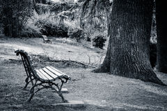 Empty benches in a park Royalty Free Stock Images