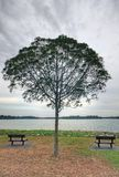 Empty Benches and a Tree. A shot taken at the Upper Seletar Reservoir in Singapore Royalty Free Stock Photography