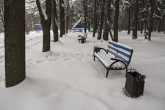 Empty benches in winter park. Royalty Free Stock Photography