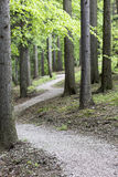 Empty bike trail in forest Stock Photography