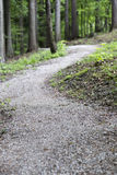 Empty bike trail in forest Stock Image