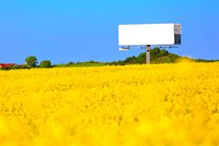 Empty bilboard on a field of yellow. Surrounded by blue sky royalty free stock photography