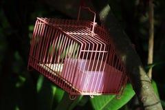 Empty bird cage Stock Images