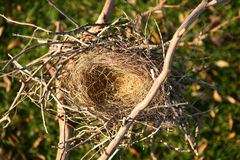 Empty Bird Nest Stock Photography