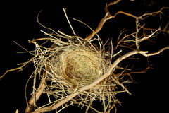 Empty Bird Nest on Black Background Stock Photo