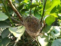 Empty bird nest. Close up picture of empty bird nest Stock Photos