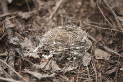 Empty bird nest. On the ground in a pine forest Royalty Free Stock Images