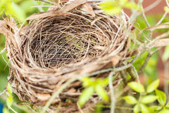 Empty bird nest. Isolated on tree Stock Photography
