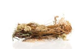 Empty bird nest Royalty Free Stock Image