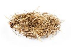 Empty bird nest Royalty Free Stock Images