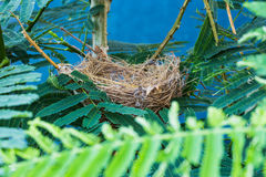 Empty bird nest with tree branches Stock Image