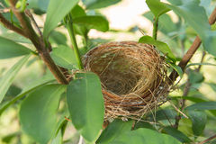 empty bird nest Stock Image