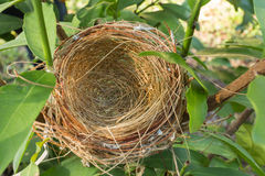 Empty bird nest. An empty bird nest with tree branches Royalty Free Stock Photography