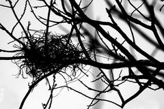 Empty bird nest on the tree Royalty Free Stock Photos