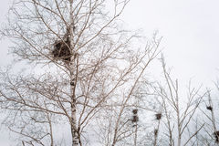 Empty bird`s nest in branches of birch tree in March stock image