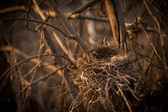 An empty bird`s nest on the branches of a tree stock photos