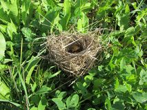 Bird`s nest in the grass royalty free stock image