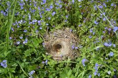 Empty bird`s nest in the green grass stock photography