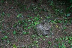 Empty bird`s nest Royalty Free Stock Photo