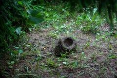 Empty bird`s nest Royalty Free Stock Images