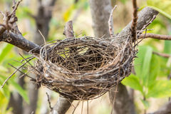 Empty bird's nest. On the tree in nature Stock Images