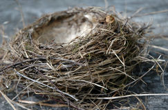 Empty birdnest Stock Photos