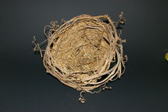 Empty Birds Nest Royalty Free Stock Photos