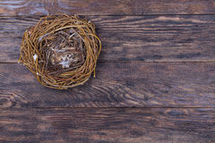 Empty birds nest on wooden background Royalty Free Stock Image