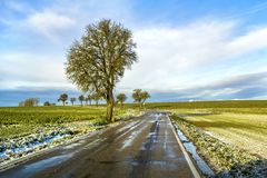 Empty black asphalt road between green fields and a lonely tree Stock Photo