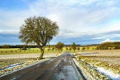 Empty black asphalt road between green fields and a lonely tree Royalty Free Stock Photography