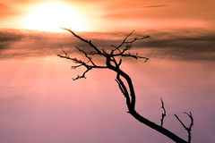 Empty black branch stretching towards the sun Stock Photography