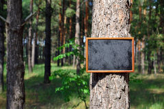 Empty black chalk board hangs on the trunk. Of a pine tree in the middle of the forest, a bright sunny day Stock Photo