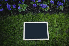 Empty blackboard over green grass Stock Photography