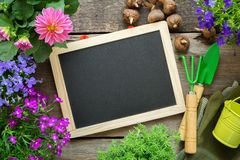 Free Empty Blackboard, Seedlings Of Garden Flowers, Bucket, Shovel, Rake, Gloves. Copy Space For Text Royalty Free Stock Images - 146231539