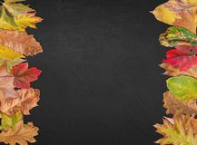 Empty blackboard for thanksgiving design postcard banner with leaves Stock Image