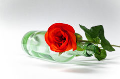 Empty blanc wine bottle witk red rose Stock Photo