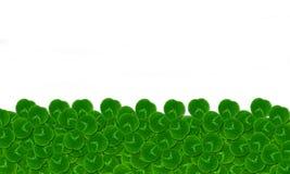 Empty blank card leaves clover trefoil Stock Image