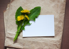 Empty blank for greeting card with a bunch of dandelion. On a background of old paper Stock Images
