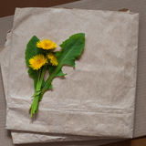 Empty blank for greeting card with a bunch of dandelion. On a background of old paper Stock Photography