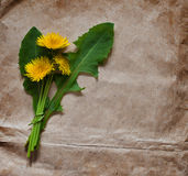 Empty blank for greeting card with a bunch of dandelion. Empty blank greeting card bunchf dandelion background old paper stock photos