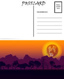 Empty Blank Postcard Template Africa Sunset Motif Royalty Free Stock Images