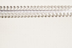 Empty blank ring, spiral notepad,can be used as background Stock Photos