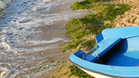 Empty blue-and-white fishing boat on the seashore on which are green algae thrown out after a storm. Waves with foam. An empty blue-and-white fishing boat on the stock video